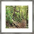 Native Bush Framed Print