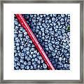 Blueberry Harvest Framed Print