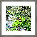 Story Of A Small Bird Framed Print