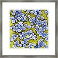 Methicillin-resistant Staphylococcus Framed Print