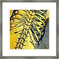 Torso Skeleton Framed Print