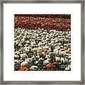 Flower Fields Framed Print