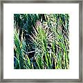 Grass In Bright Sunlight Framed Print