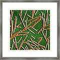 Tobacco Mosaic Virus, Tem Framed Print by Omikron