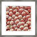 Intestinal Lining, Sem Framed Print