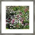 A Bed Of Beautiful Different Color Flowers Framed Print