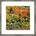 A Blustery Autumn Day Framed Print