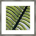 A Close View Of A Fern Framed Print