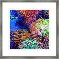 A Flash Of Life And Color Framed Print