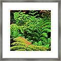 A Mass Of Ferns Framed Print