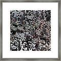 A Mob Of Red-winged Blackbirds Framed Print