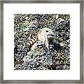 A Mothers Protection Framed Print