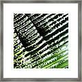 A Palmfrond Framed Print by Catherine Natalia  Roche
