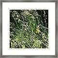 A Riot of Wildflowers Framed Print