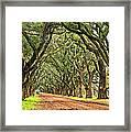 A Southern Lane Framed Print