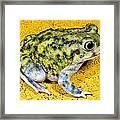 A Spadefoot Toad Framed Print