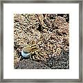A Spider With The Egg Sack Square Framed Print