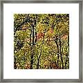 A Splash Of Fall Framed Print