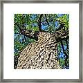 A View From Below Framed Print