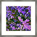 Abstract 207 Framed Print