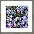 Abstract 208 Framed Print