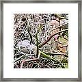 Abstract Caput Medusae Framed Print