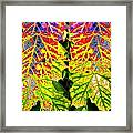 Abstract Fusion 16 Framed Print
