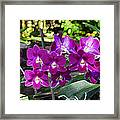 Accented Purple Orchid  Framed Print