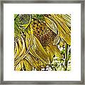 Afternoon Sunflower Framed Print