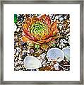 Agates And Cactus Framed Print