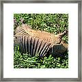 Alabama Road Kill Framed Print