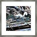Albino Squirrel Framed Print