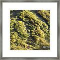 Algae Bloom In A Pond Framed Print