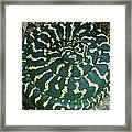 All Coiled Up Framed Print