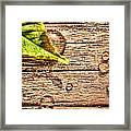 All That Drops On The Deck Framed Print
