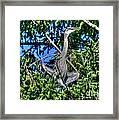 Amazing Heron Framed Print