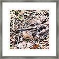 American Woodcock Chick No. 2 Framed Print
