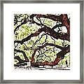 Angel Oak Tree 2 Framed Print