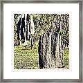 Ant Megastructures-a Trillion Tiny Builders Framed Print