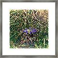 Antiquated Flower Framed Print