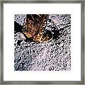 Apollo 14 Foot Pad Framed Print