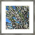 Apple Tree In Bloom Framed Print
