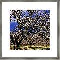 Apple Trees In An Orchard, County Framed Print