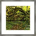 Arches In The Rainforest Framed Print