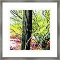 Arizona Catcus Framed Print