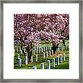 Arlington Cherry Trees Framed Print