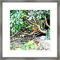 Art Squirrel Framed Print