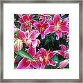 Asiatic Lillies Framed Print by Randall Weidner