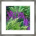 Astilbe And Ferns Framed Print