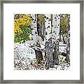 Autumn Aspens And Snow Framed Print